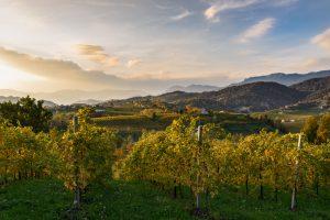 Nuovi bandi Gal per lo sviluppo locale del Veneto