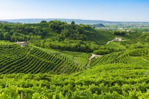 Spesa per lo sviluppo rurale, il Psr Veneto leader in Italia