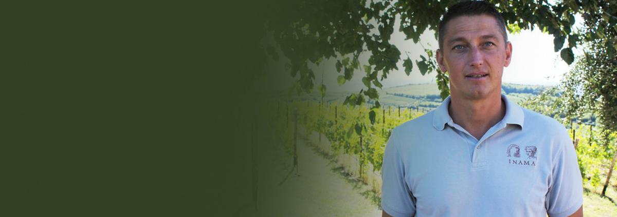DI.VI.NE, un progetto per proteggere dai parassiti  il meglio della viticoltura veneta